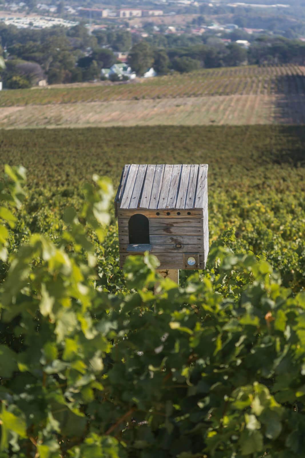 journeys-end-premier-vineyards-_MG_0419