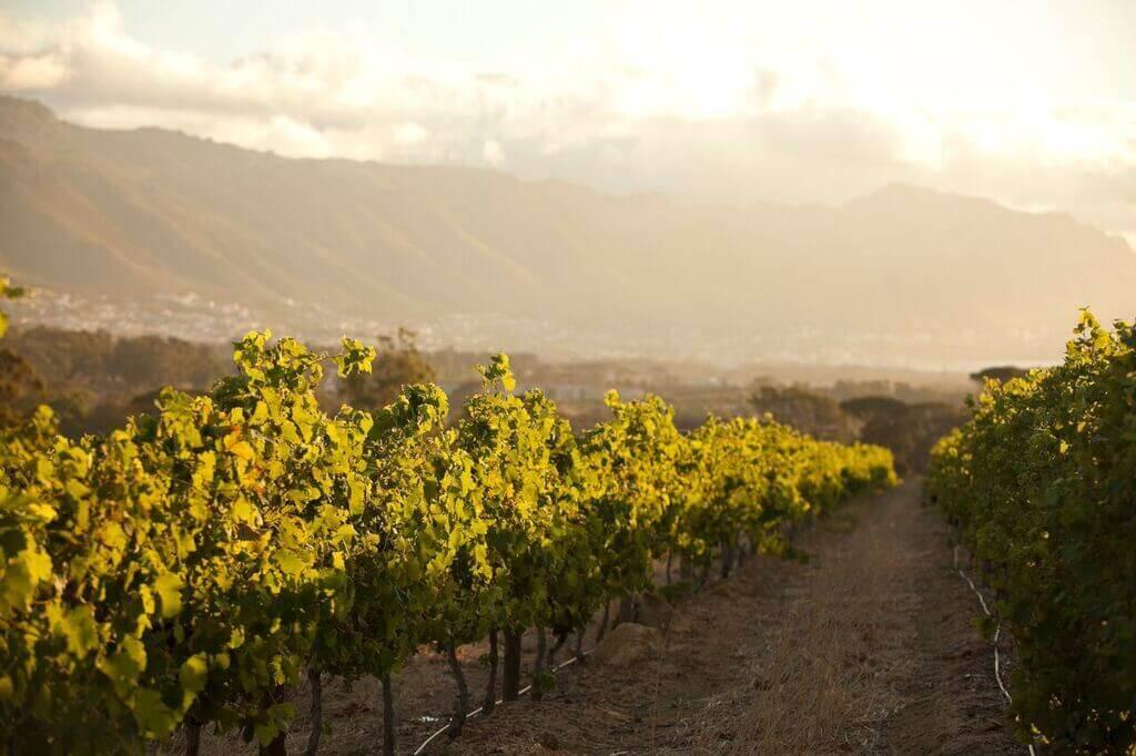 journeys-end-premier-vineyards-focus on the vines