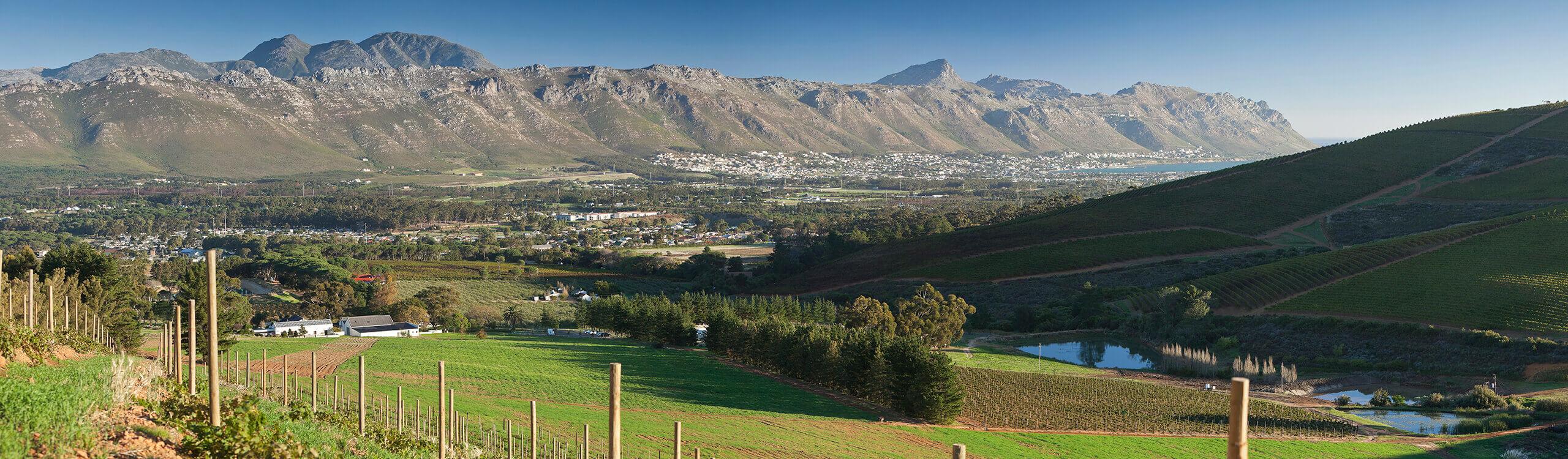 Mount Rozier Wines Banner