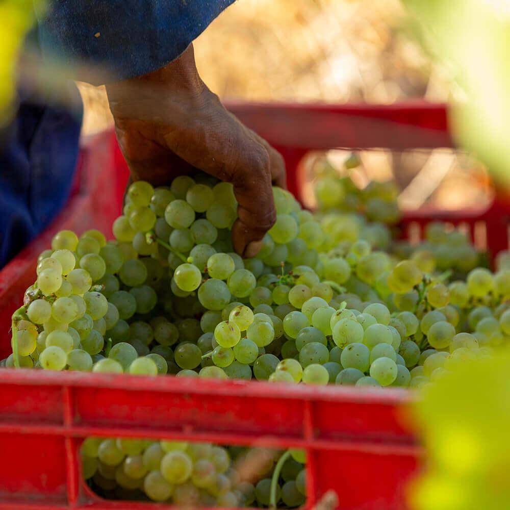 Mount Rozier Wines